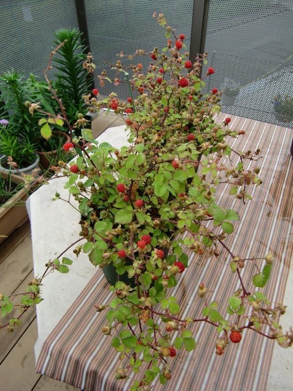 110512raspberry2