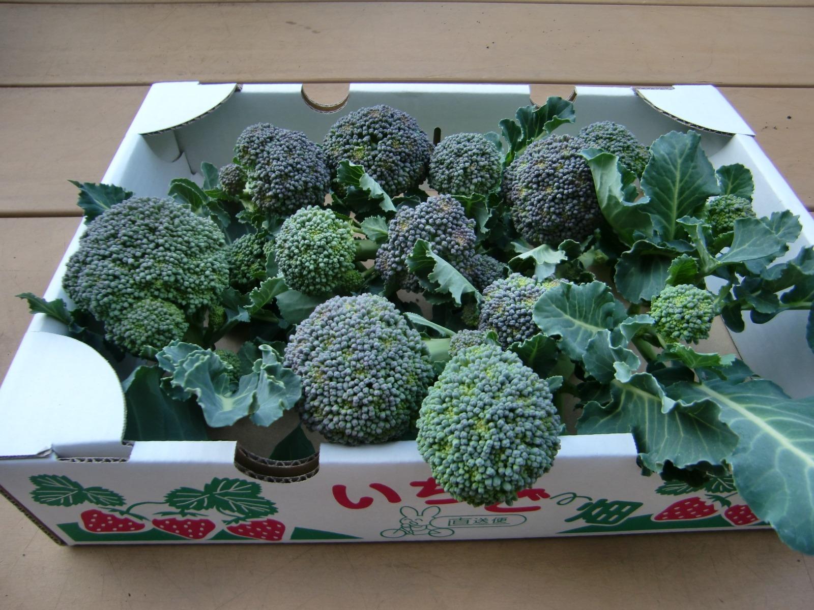 130303broccoli