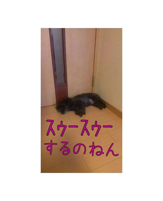 20120912-115332.jpg