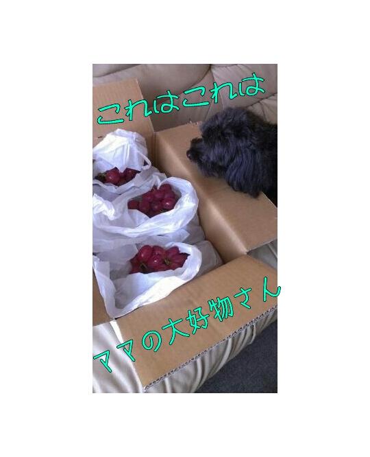 20120923-205627.jpg