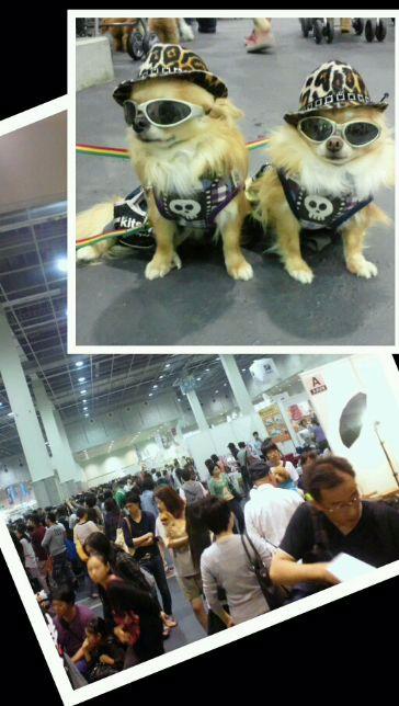 Collage_20121006-1.jpg