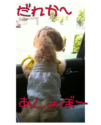 IMG_2012082922638.jpg