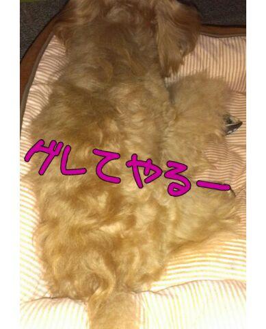 IMG_2012092052993.jpg