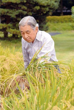 天皇陛下稲刈り2012年