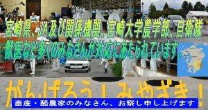 sakuraraボード-頑張れ宮崎!7