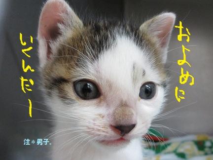 2012もん 008 (2)