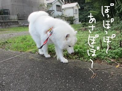 IMG_0002_20121012225727.jpg