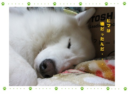IMG_0005_20121115231258.jpg