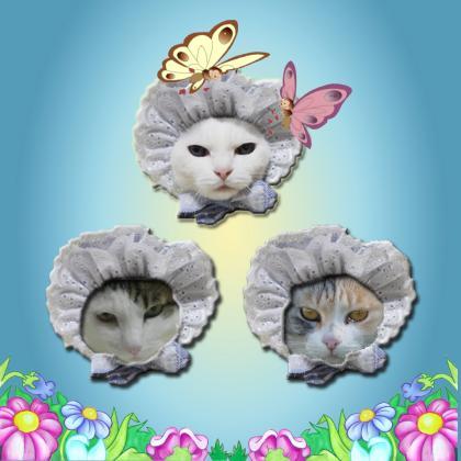 3 cute cats_C