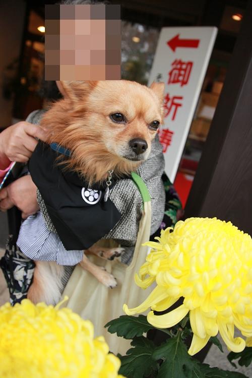 家の愛犬 (4)