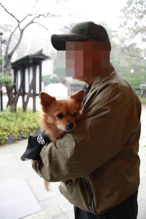 家の愛犬 (15)