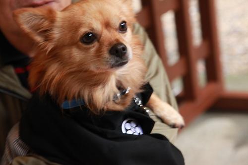 家の愛犬 (80)