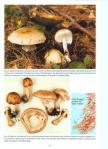 The_Genus_Agaricus_in_Great_Britain3.jpg