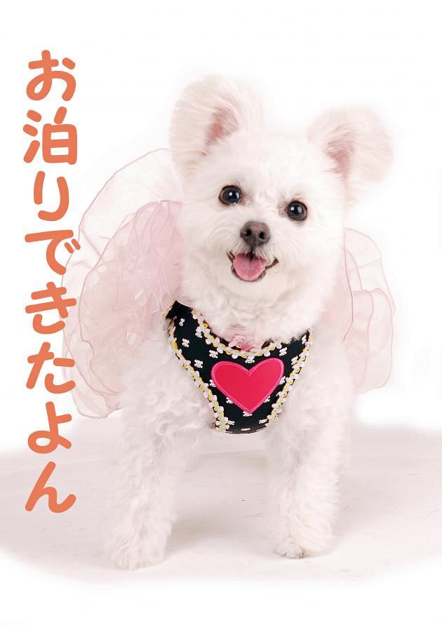 DSC_0379_convert_20121002204059.jpg