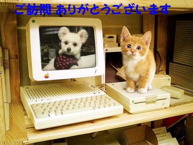 FUNNYWOW_0ba65b4e9a1b00ed_convert_20120820225613.jpg