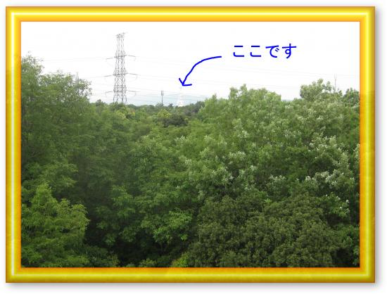 IMG_1652_convert_20120519222752.jpg