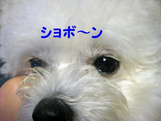 IMG_1900_convert_20120614003430.jpg