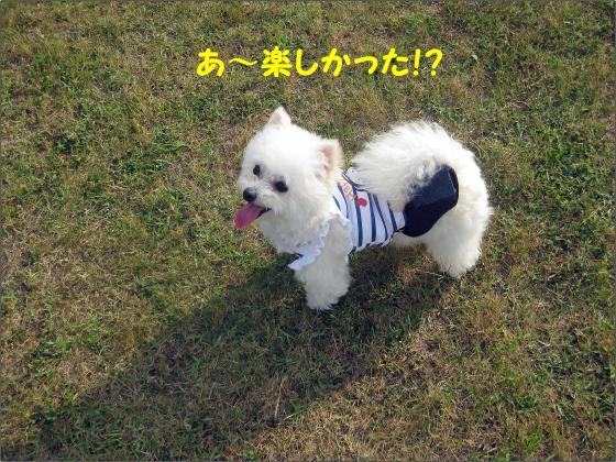 IMG_1910_convert_20120611210609.jpg