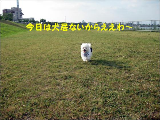IMG_1912_convert_20120611210905.jpg