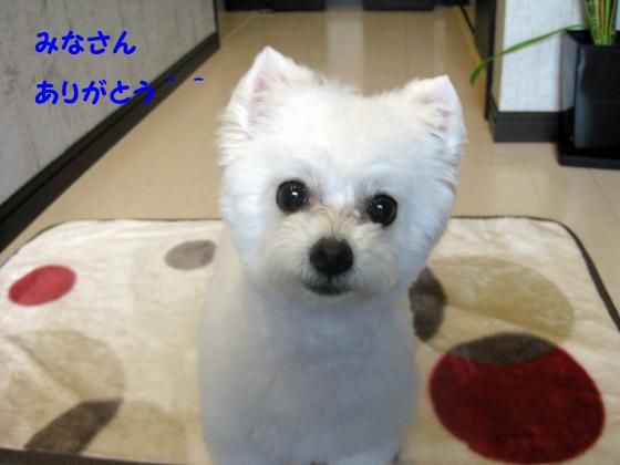 IMG_2071_convert_20120627001308.jpg