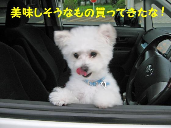 IMG_2338_convert_20120727010728.jpg