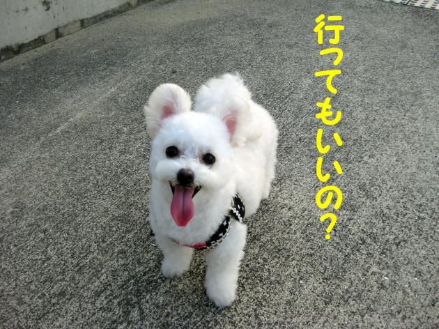 IMG_2744_convert_20120826014219.jpg
