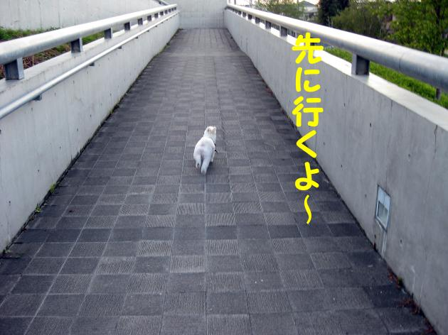 IMG_2745_convert_20120826014335.jpg