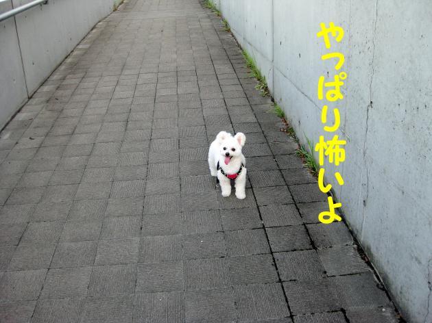 IMG_2747_convert_20120826014710.jpg