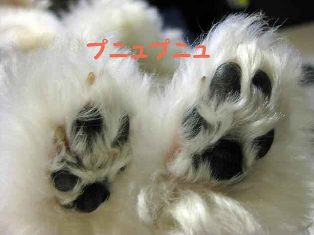 IMG_2921_convert_20120918222536.jpg