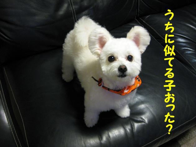 IMG_2981_convert_20120925225715.jpg