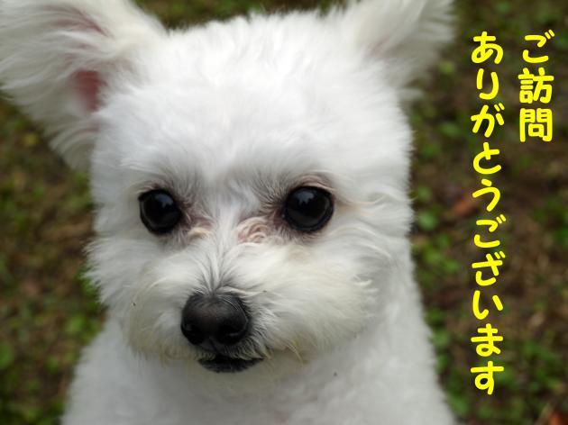 P1010331_convert_20121124203805.jpg