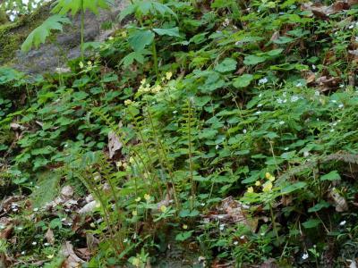 滝周辺の植物群落