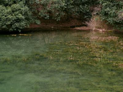 ハタベカンガレイ自生地の溜池