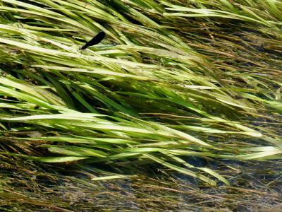 湖西の水路