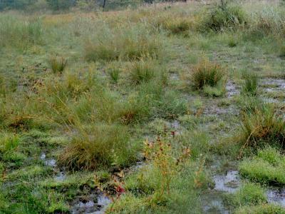 湿地化の進んだ休耕田