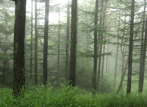 3カラマツ林