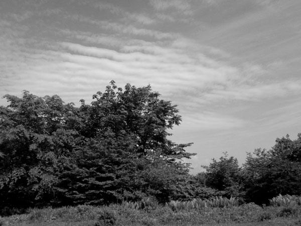 6雲(ノーマルグレースケール)