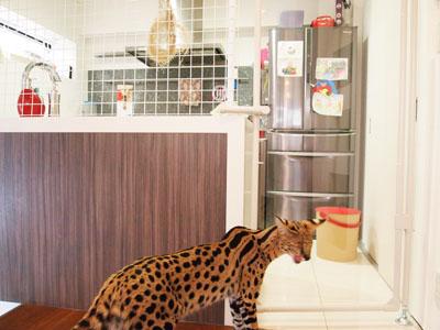 キッチンにドア20130305_01