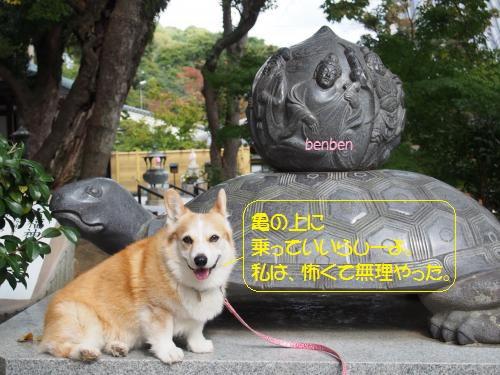 須磨寺の亀さんと