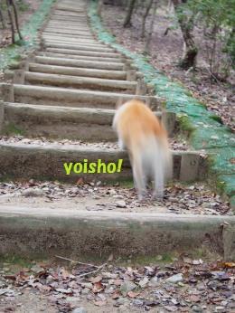 階段ぴょん1
