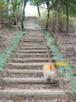 階段ぴょん2