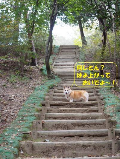 階段ではよおいで~の節ちゃん