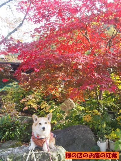 山麓園の紅葉
