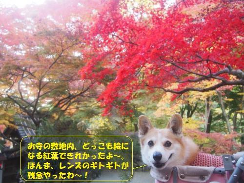紅葉さいこ~~