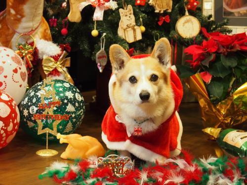クリスマスツリー前で真顔。。