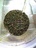 乾燥茶葉(100309)_02