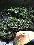 100825_枝豆の葉を食してみる_02