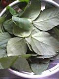 100825_枝豆の葉を食してみる_01