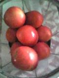 100826_トマトを収穫