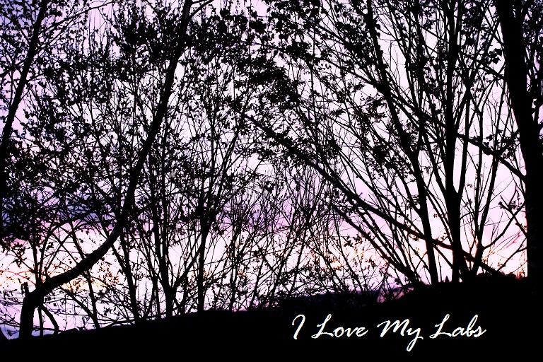 IMG_9367GW 2012